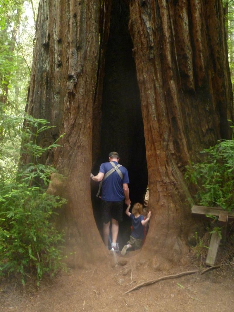 Scott Entering Giant Redwood with Family
